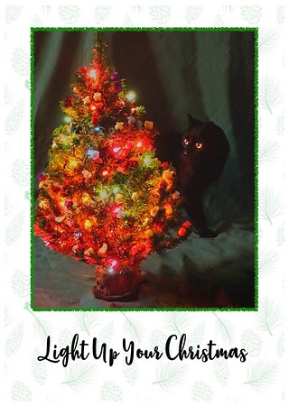 This Year's Card and Other Christmas Cat Capers -  2020