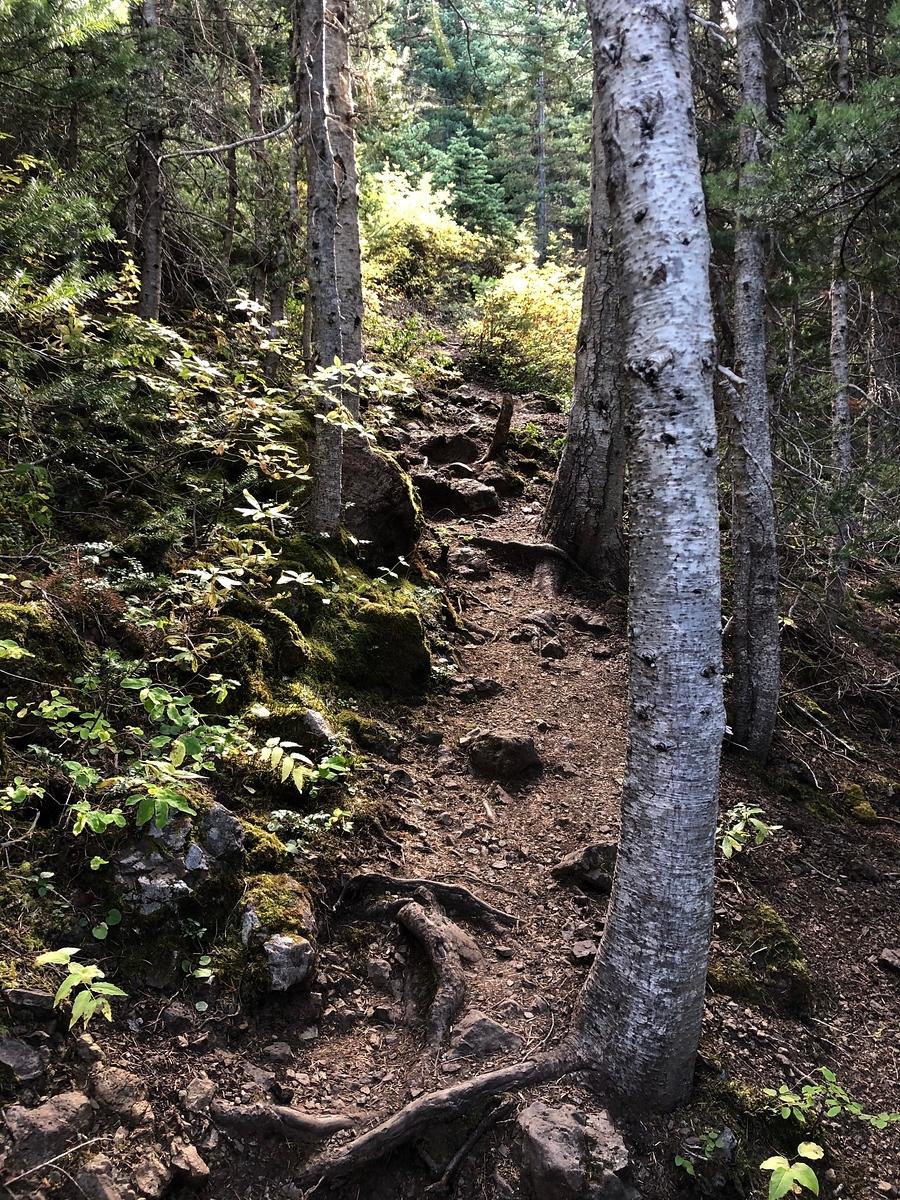 Rocks, roots, steep