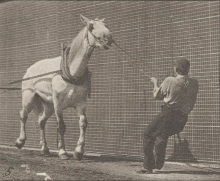 Horse Johnson hauling while being pulled by a man at head