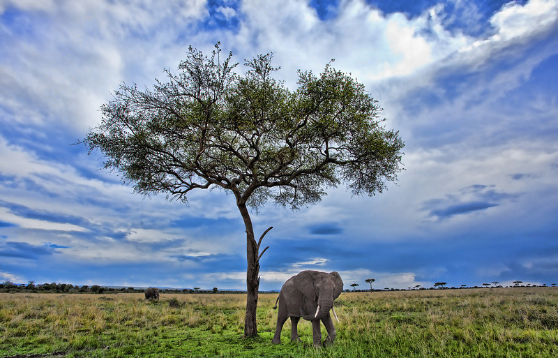 African Elephant with Stormy Sky