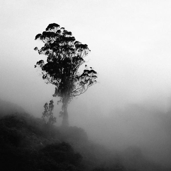 Lonely Tree.jpg