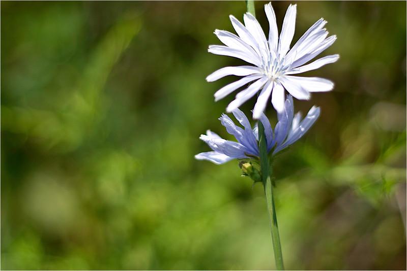 20110724_Flower1.jpg