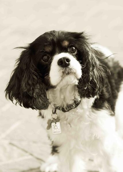 Clifton_Dogs_0056.jpg