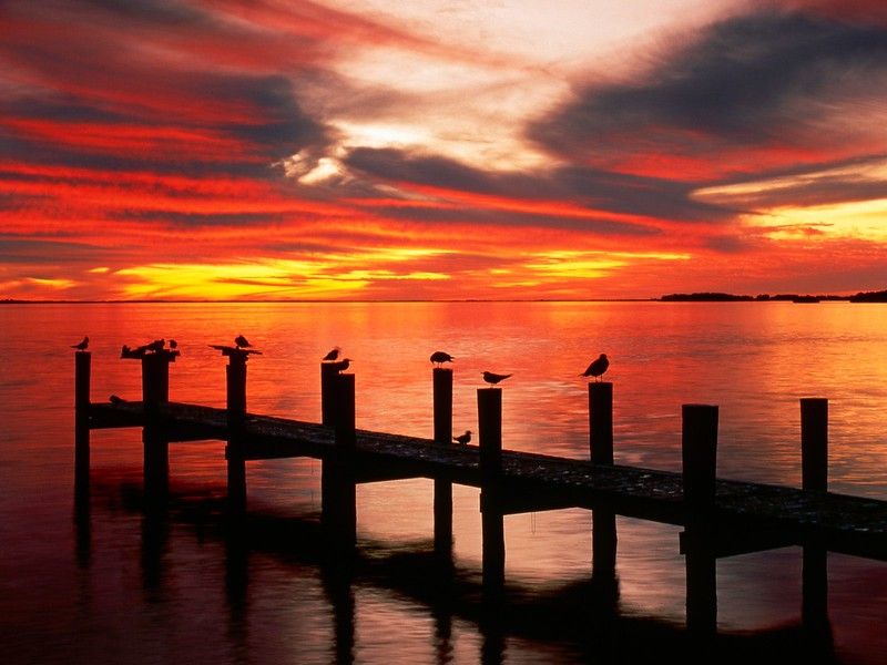 Seagulls at Sunset, Fort Myers, Florida.jpg