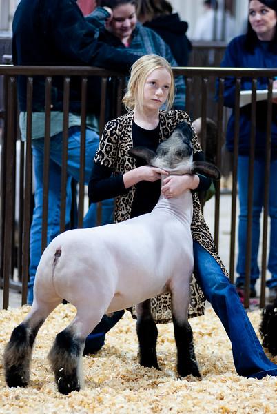kay_county_showdown_sheep_20191207-85.jpg