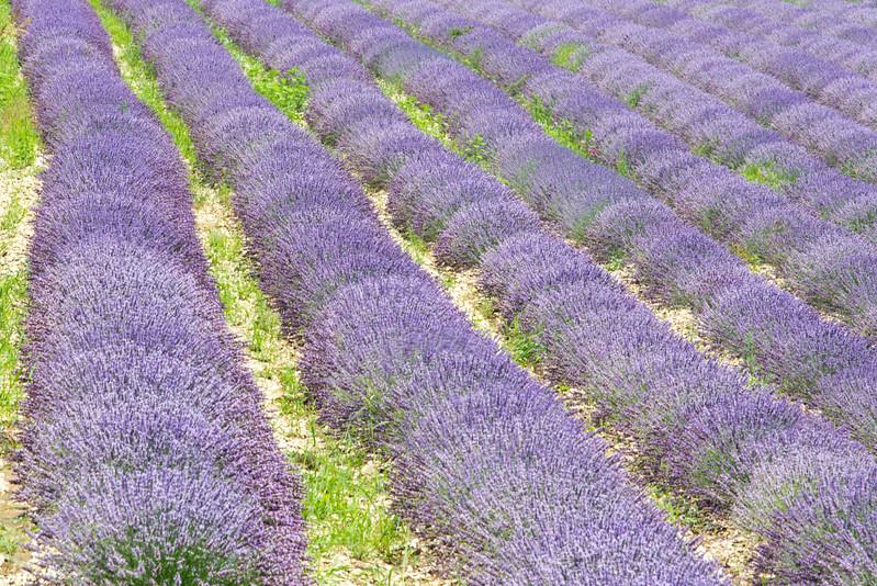 Provence- France - Jul 2013- 006.jpg