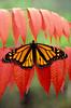 Butterflies & Moths :