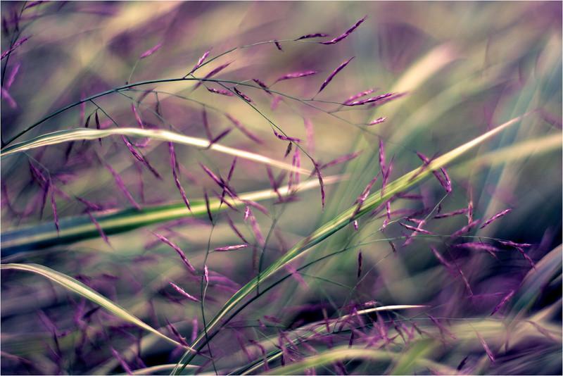 20111015_Flower14.jpg