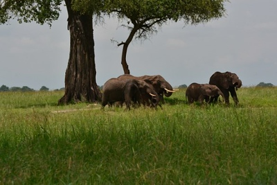 1494239968African-Safari-3.jpg
