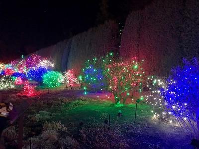 Botanic Gardens Christmas Lights
