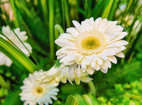 2021_June_Flowers in Bloom