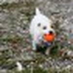 farley pups 075-2.jpg