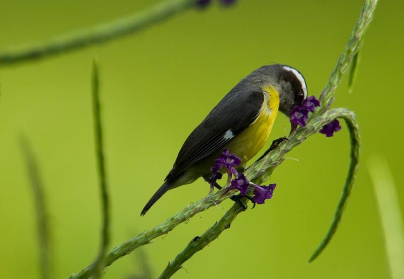 bird4585.jpg