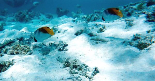 Tikehau Underwater