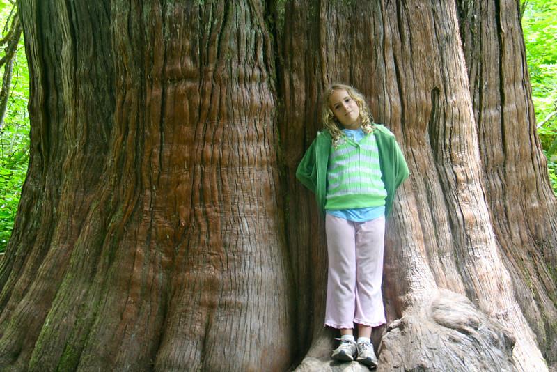 Violet and biiig tree.