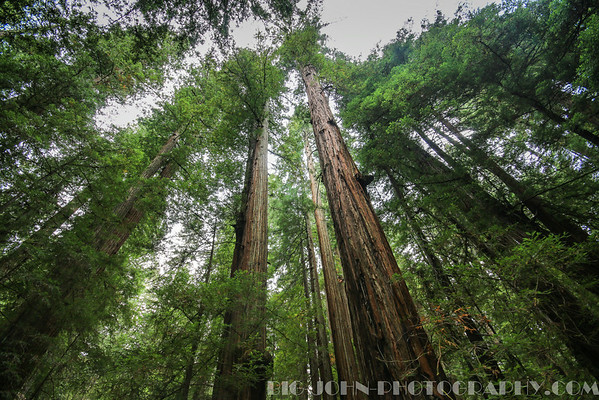 Armstrong Redwoods State Natural Reserve California 8-3-14