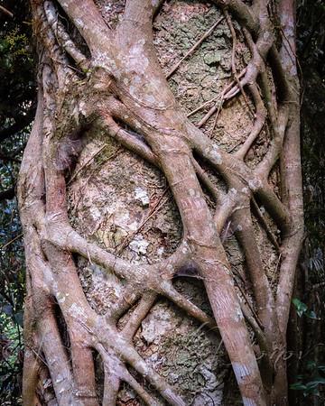 Trees & Vines
