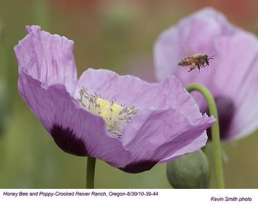 HoneyBee&Poppy39044.jpg
