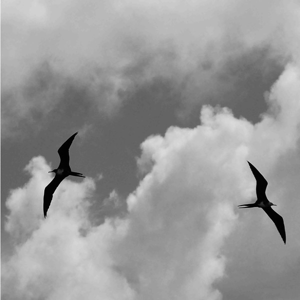 ESK_9083.jpg-Frégates Seychelles.jpg