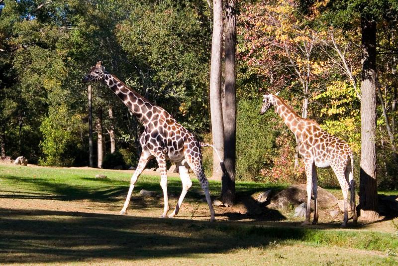 zoo_161.jpg