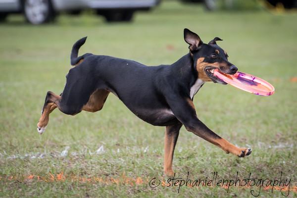 _MG_3023Up_dog_International_2016_StephaniellenPhotography.jpg
