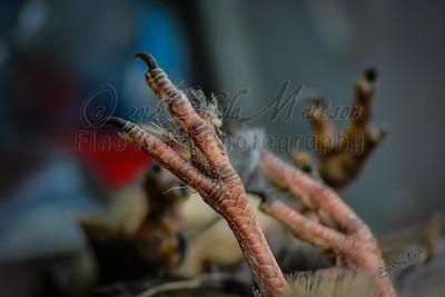 Pheasant/Chukar Hunting