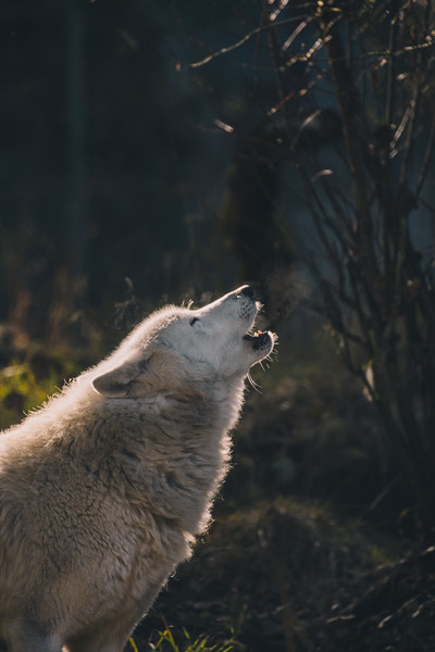 WolfHaven (29 of 31).jpg