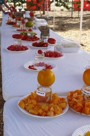 Tomato Event-GreatPark 2012-08-11
