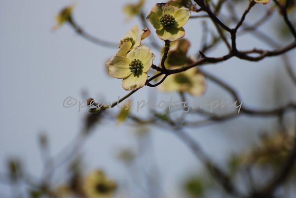 Gibbs Garden 04-03-2014
