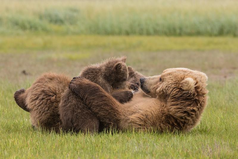 alaska-bears-16.jpg