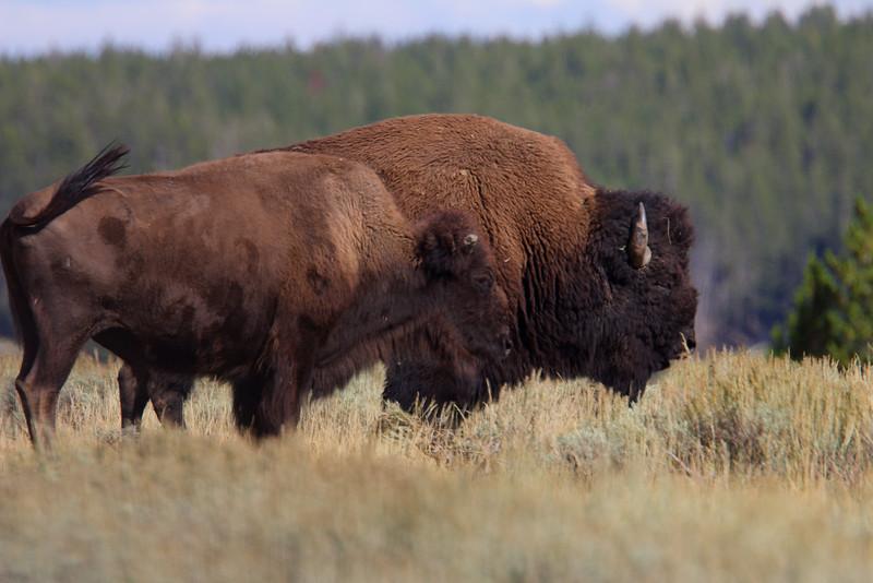 Yellowstone 060.JPG