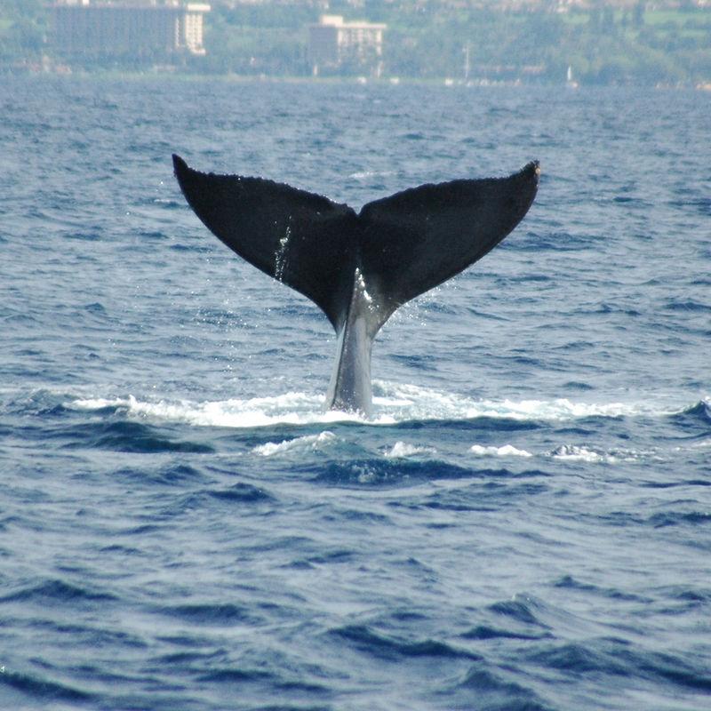 whale tail 28.JPG