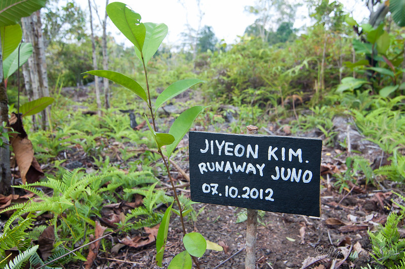Tree planting in Borneo