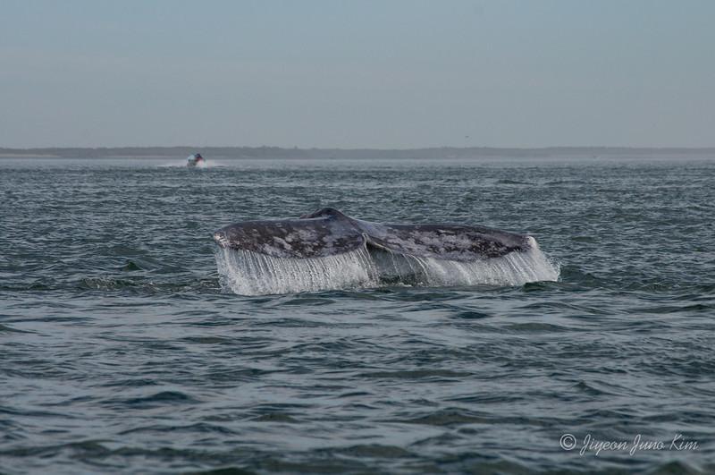 Mexico-Loreto-Whale-2355.jpg