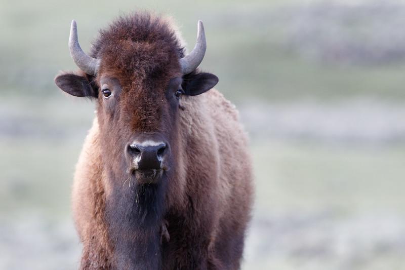 Yellowstone-2255.jpg