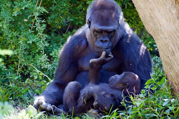 Animals: Parenting 2