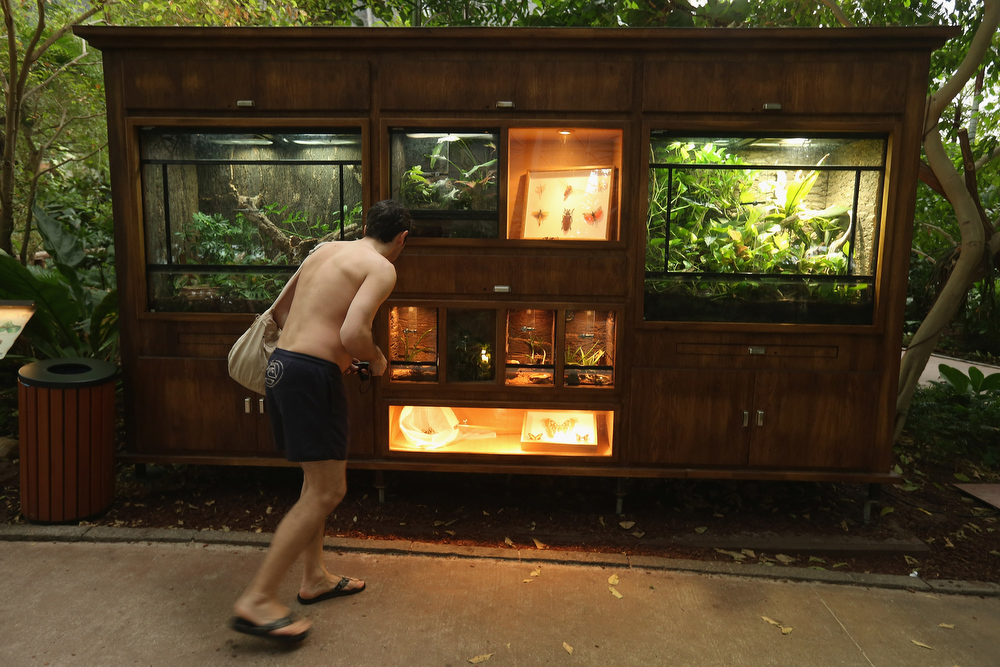 . A visitor looks at a display of tropical insects and spiders at the Tropical Islands indoor resort on February 15, 2013 in Krausnick, Germany. Located on the site of a former Soviet military air base, the resort occupies a hangar built originally to house airships designed to haul long-distance cargo. Tropical Islands opened to the public in 2004 and offers visitors a tropical getaway complete with exotic flora and fauna, a beach, lagoon, restaurants, water slide, evening shows, sauna, adventure park and overnights stays ranging from rudimentary to luxury. The hangar, which is 360 metres long, 210 metres wide and 107 metres high, is tall enough to enclose the Statue of Liberty.  (Photo by Sean Gallup/Getty Images)