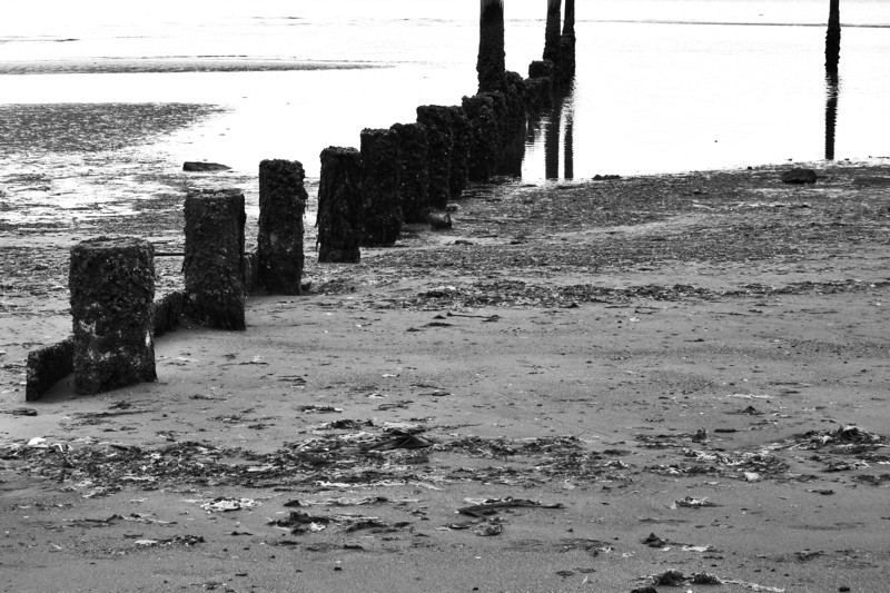 060618-132BW (Abstract; Pilings, Tideflats).jpg
