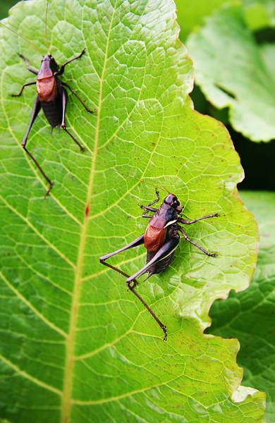 romania-bugs.jpg