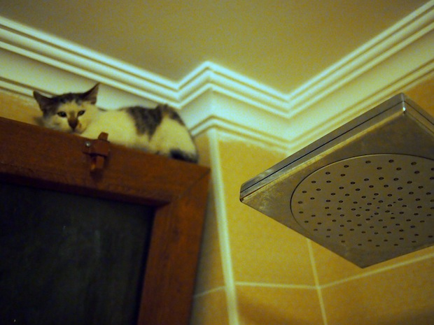 cats in turkey: this one was in my shower in Istanbul!