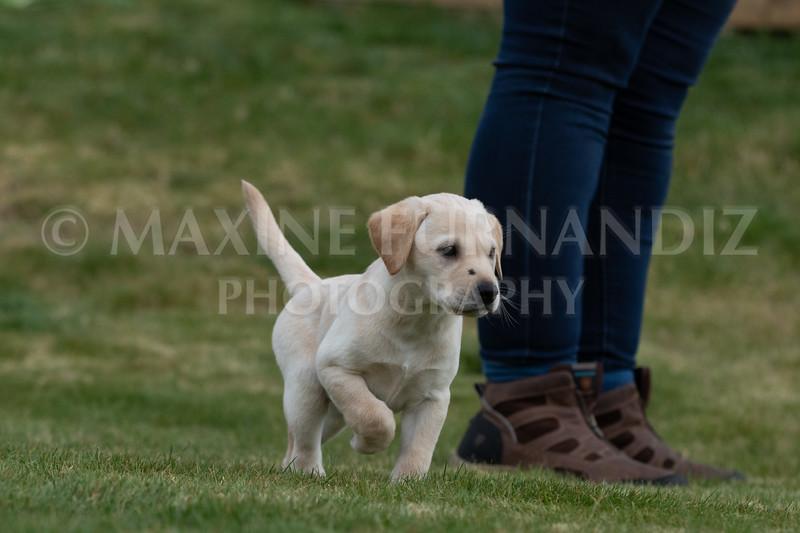 Weika Puppies 24 March 2019-6674.jpg