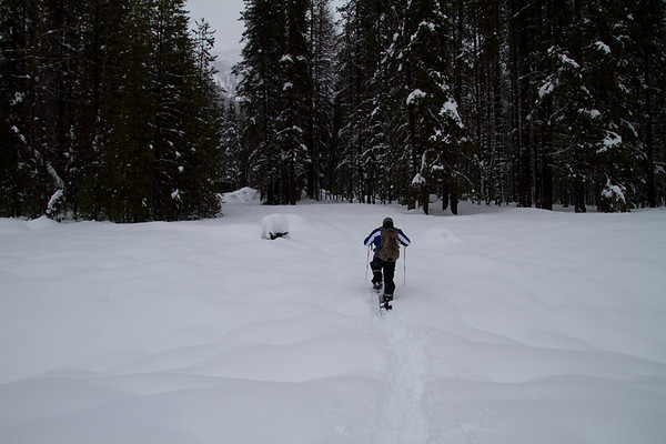 2018-01-27 Snowshoeing on Chinook Pass, Bumping Lake