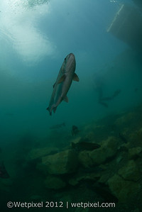 120512-D800 underwater 2-0921
