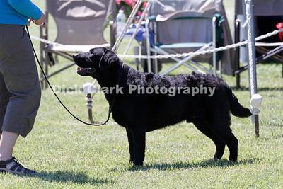 Friday - Puppy 9-12months Dog