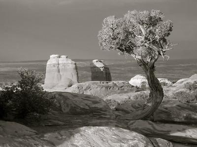 Desert Solitaire 2009