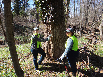 4.6.14 Invasive English Ivy Removal & Sawmill Branch cleanup at Catonsville Historical Society in Catonsville
