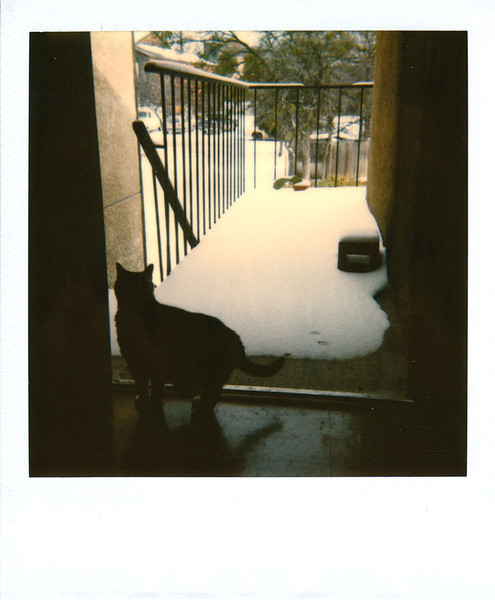 Polaroid_0033-XL.jpg
