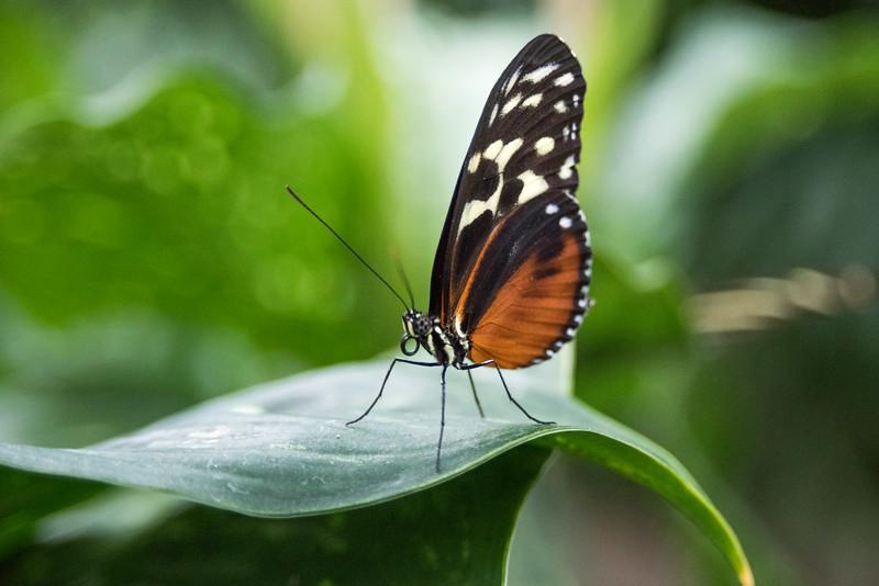 butterfly-302.jpg