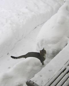 Snowmageddon 2010-02