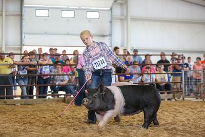 Swine Show FREE to Download